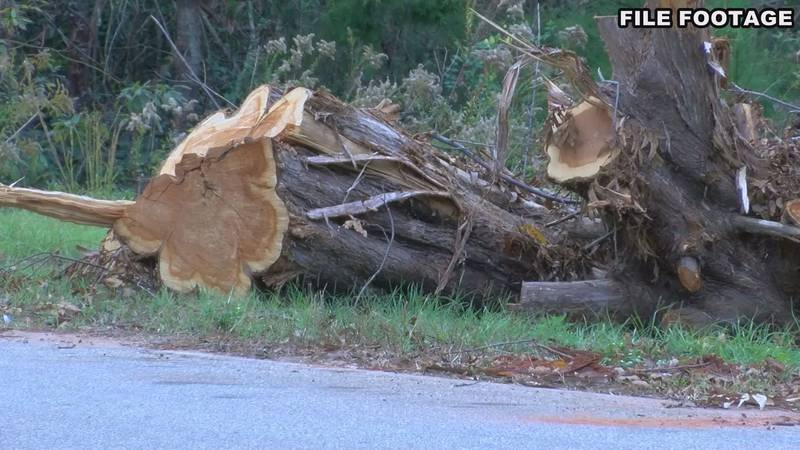 Early County storm damage after hurricane Michael. (Source: WALB)