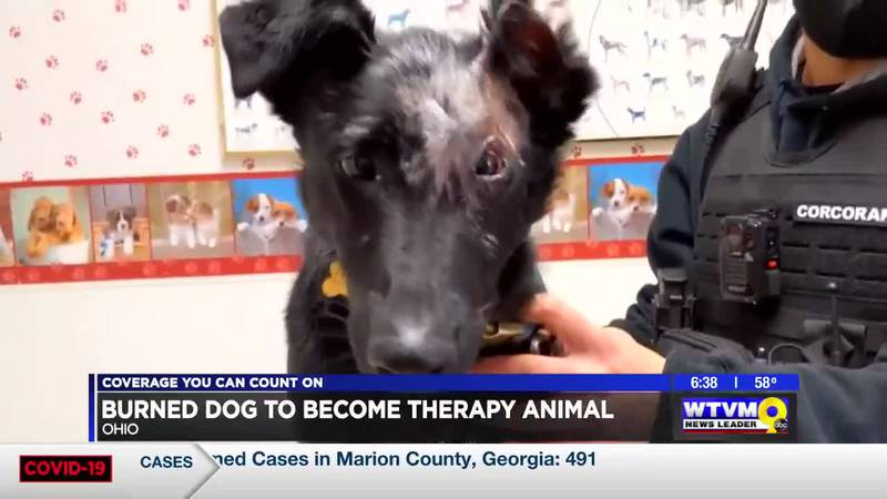 Power of Goodwill: Severely burned dog to become therapy animal