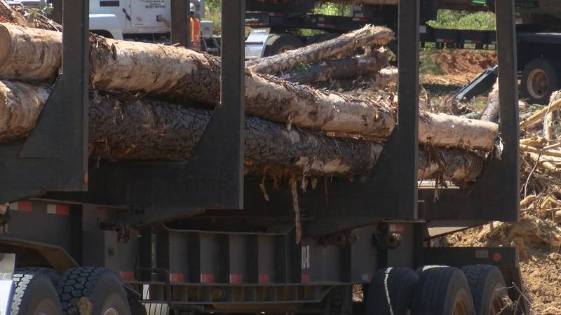 Gov. Kay Ivey has awarded $10 million of CARES ACT funds to help timber owners impacted by the...