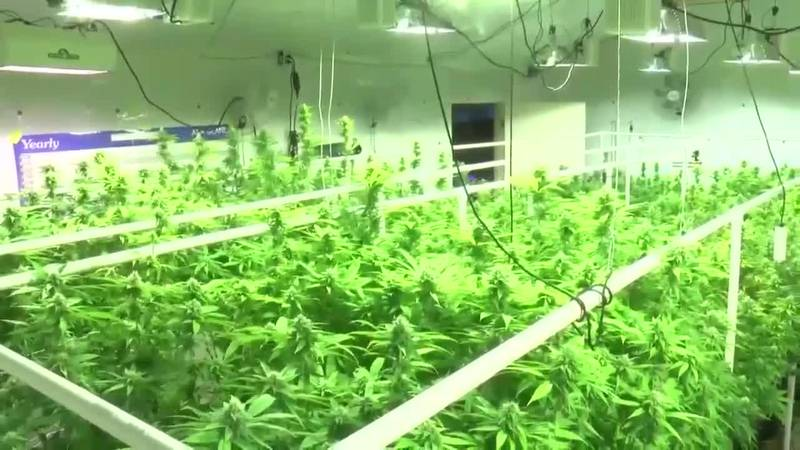 Are Alabama farmers prepared for medical cannabis?