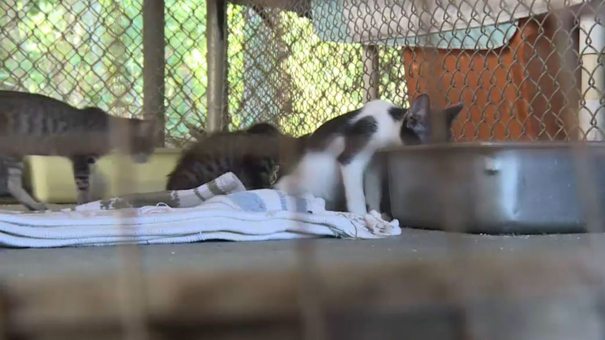 Twenty-nine cats were mauled by pit bulls at the Dothan Animal Shelter. (Source: WTVY)