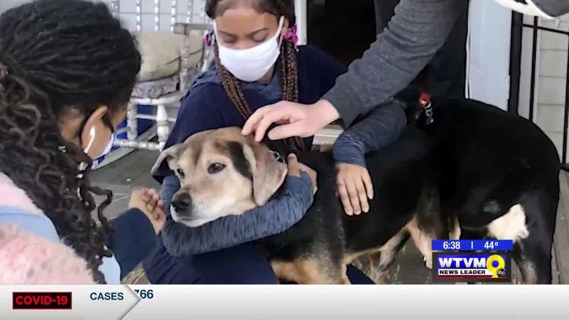 Power of Goodwill - Animal Rescues See Surprising Changes During Coronavirus