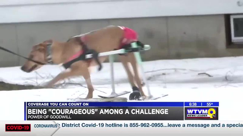 """Power of Goodwill: """"Courageous"""" dog faces challenges"""