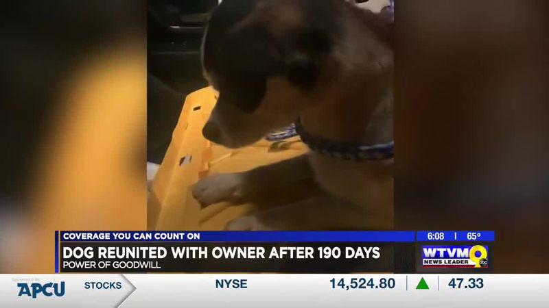 Power of Goodwill: Dog united with owner after 190 days