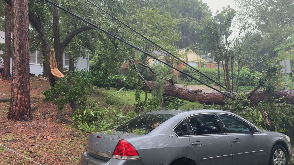 Storms on Sept. 16, 2020 knocked down a tree on Waringwood Drive in Montgomery.