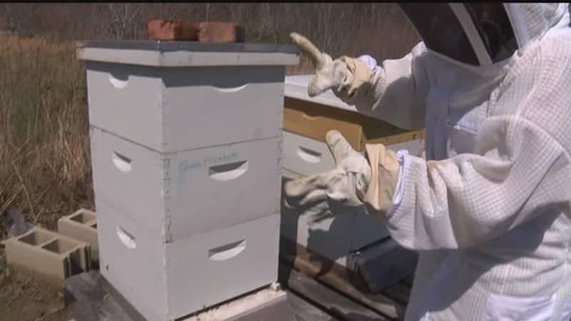 Saving the bees