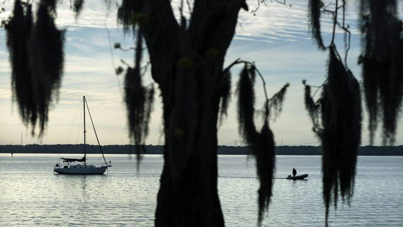 Spanish moss hangs from a tree along the St. Johns River in Palatka, Fla., Thursday, April 15,...